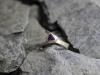 thumbs ring zilver amethist Ringen