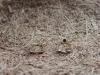 thumbs geelgoud diamant robijn vlinderring Ringen